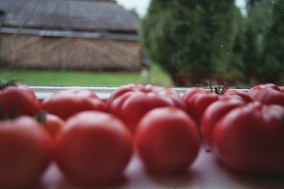 tomatoes window film 35mm photography nature film grain fuji iso 800 vintage analogue