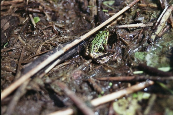 green frog wood sticks film 35mm photography nature film grain fuji iso 800 vintage analogue