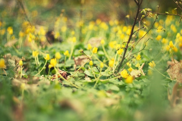 yellow flowers green grass in between  spring groningen Netherlands holland walk windy day spring colours awake spring feelings in the air  having fun snapping