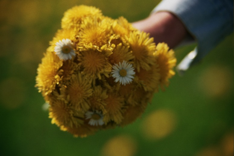 green bokeh film 35mm analog grain  fujifilm superia 200 holland netherlands  bunch flowers meadow  picked yellow dandelion