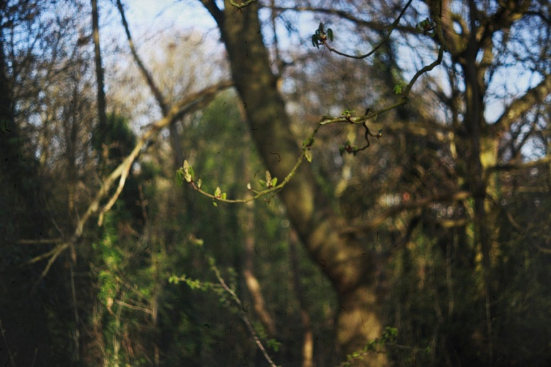 tree branch green nature  bokeh manual lens london